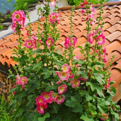 toit et fleurs typiques