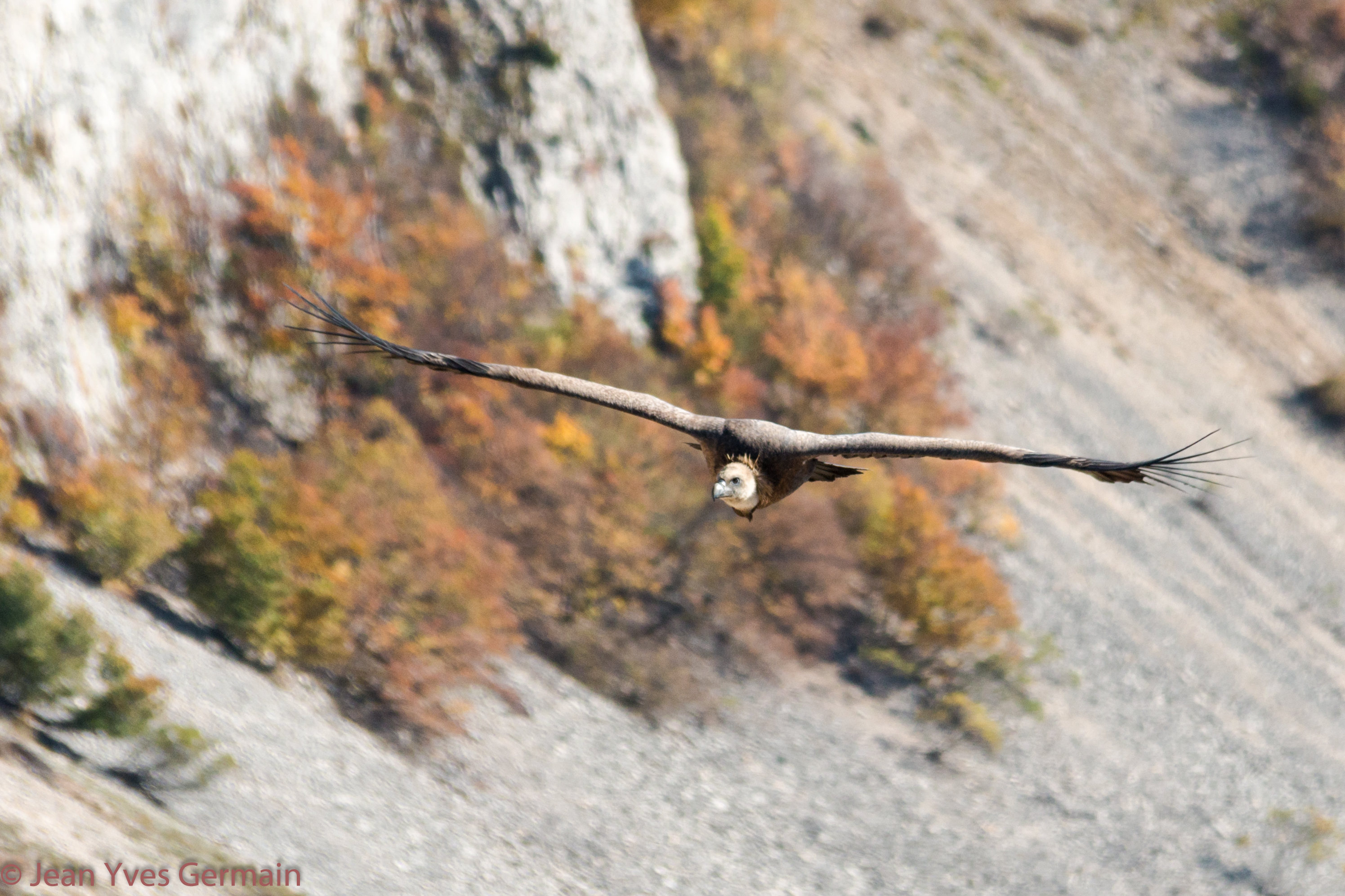 vautour iso 200 200mm 1-800 f-6.3